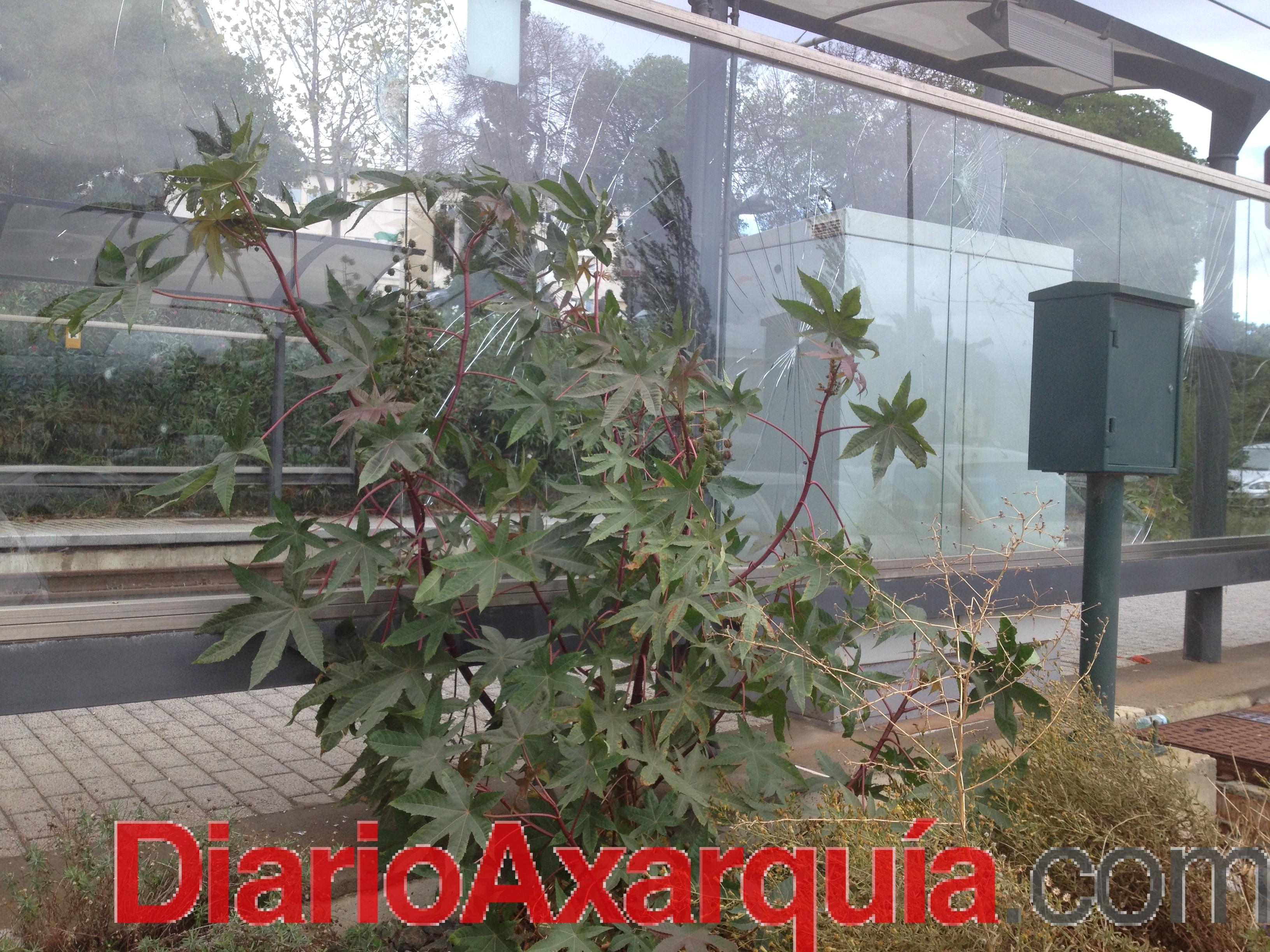 El Ayuntamiento de Vélez-Málaga evalúa los desperfectos existentes en el trazado del sistema tranviario