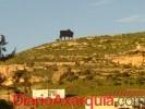 El Ayuntamiento investiga qué le ha pasado al toro de Almayate
