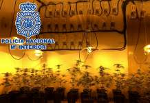Durante el operativo los investigadores han practicado siete registros en inmuebles y han intervenido, además de la sustancia estupefaciente, 100 lámparas de gran potencia, 72 portalámparas, 11 ventiladores, una balanza de precisión, tres vehículos y 1.765 euros en efectivo, entre otros efectos.