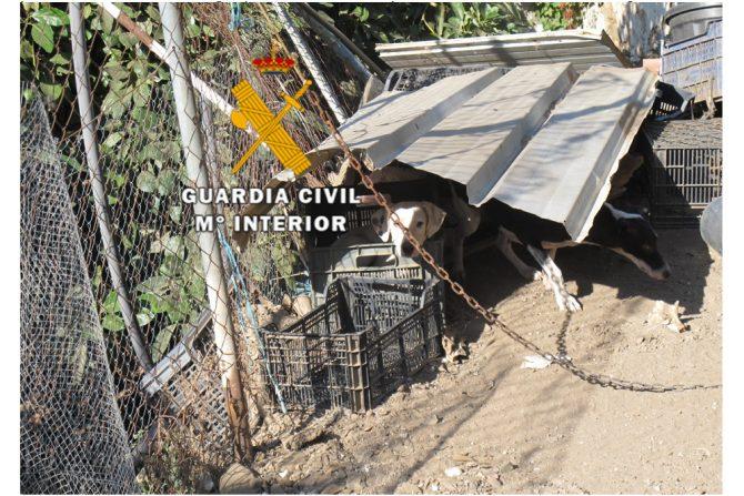 Por estos hechos, se ha actuado en calidad de investigados contra los 3 propietarios de los canes a los que se les acusa de un Delito de Abandono Animal.