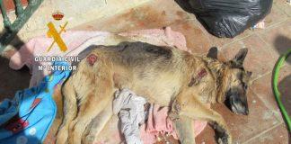 • Han sido investigadas tres personas por delitos de abandono de animales, siendo rescatados un total de 38 perros.