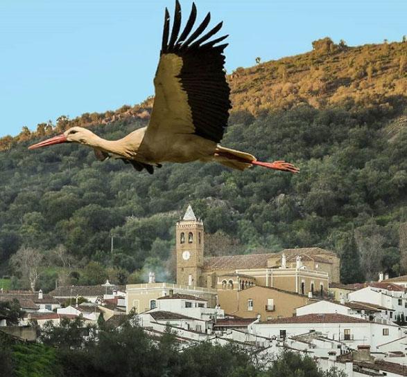 Imagen de Manuel Ruiz-Almonaster.
