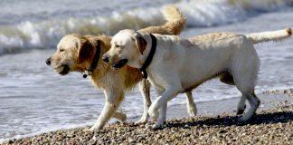 Imagen genérica de perros. / Agencias.
