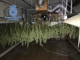 Han sido arrestados un hombre y una mujer -de 28 y 21 años y residentes en una de las viviendas- por su presunta implicación en los delitos de tráfico de drogas y defraudación de fluido eléctrico .